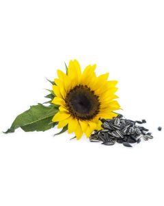 Growable Sunflower Garden Seeds